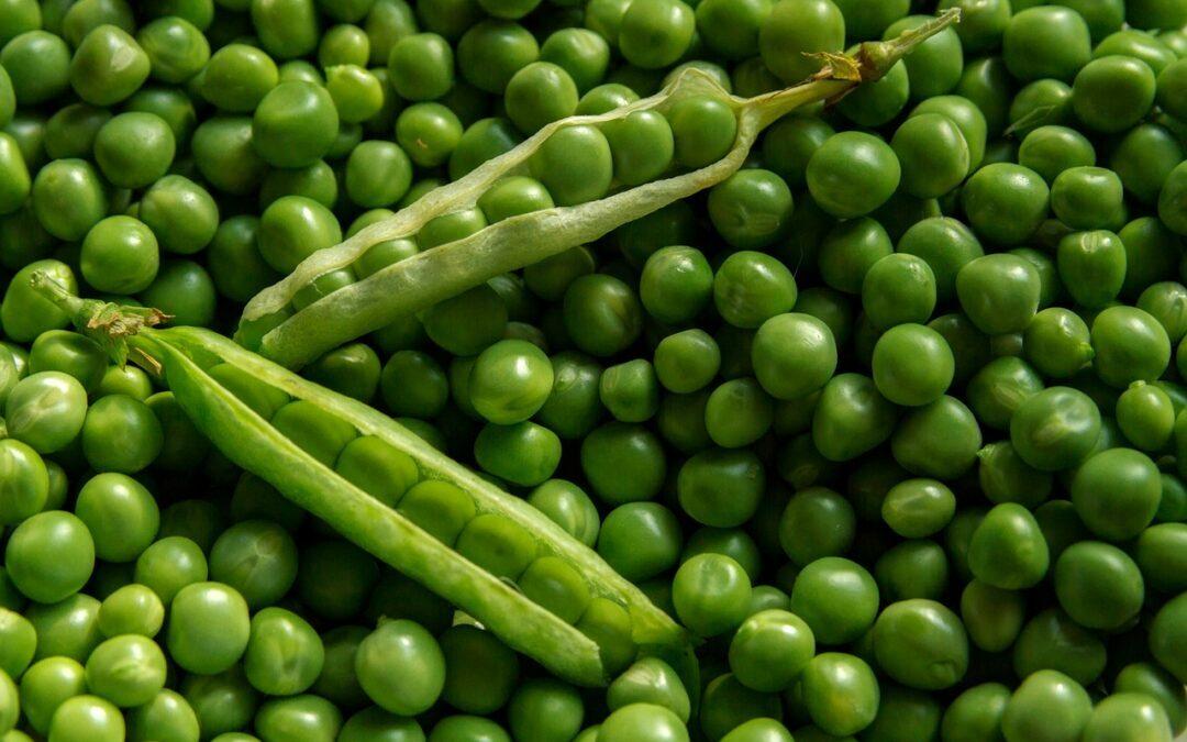 Guisantes, una excelente fuente de proteína vegetal